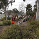 Planting Bee – Scullin Shops Rear Garden